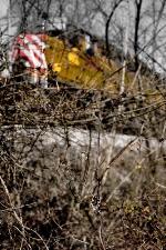 CITX 2801 hides in the undergrowth