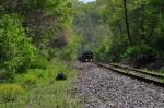 INRD 3808 climbs through spring woodland