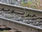 weeds growing in the tracks