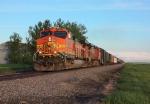 BNSF 4353 at Northcote, MN