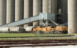 UP grain train at Cargill