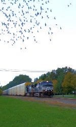"""NS 9278 Train 290 is """"For the Birds"""""""