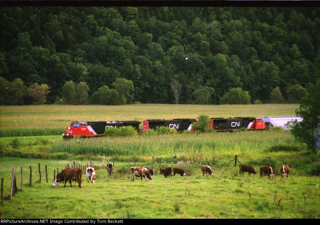 Pastoral scene in the valley