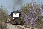 GC 3917 rolling past some Wisteria