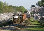 GC 3959 leading Y101 through the Cherry Blossoms