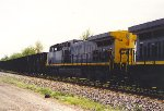 CSX 109 1 month old