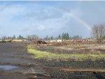 Rainbow Over The Yard
