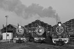 Lineup of Reefsteamers locomotives
