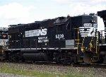 NS 5239