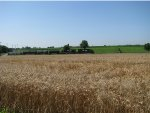 NS 3075 passing a wheat field