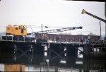 NYSW American Crane 0280