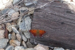 pretty little butterfly on a cross tie on the old clinchfield railroad!!!