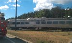 CN 1501 - Inspecting Plover