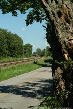 HOW MANY INTERESTING TRAINS HAS THIS OLD TREE SEEN?