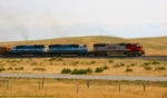BNSF 8286 leading coal loads south of Billings, MT.