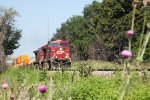 CP 8892 leads eastbound intermodal train 198 past the wildflowers