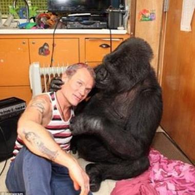 Flea le prestó su bajo a Koko, la gorila, y así suena