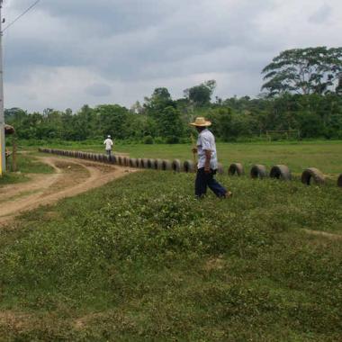 'Pazo' Nº 2: Colombia, es momento de sembrar paz en vez de coca