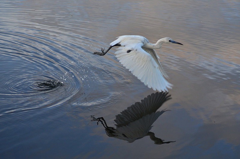 an essay on a white heron by brandi jones Title: length color rating : essay about a white heron - ''a white heron'' begins on a june evening near the maine coast as the sun sets, nine-year-old sylvia drives home a.