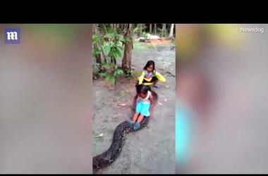 Indonesian children play dangerous game with RETICULATED PYTHON