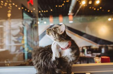 Java Cats Cafe - Chris House Photography