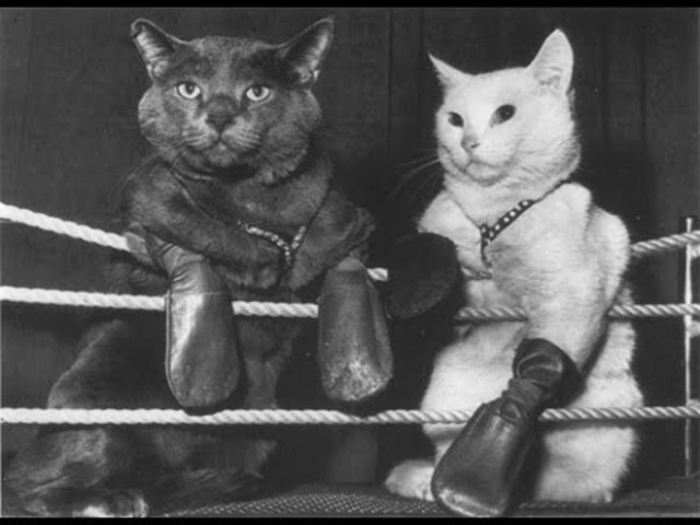 The First Comedy - The Boxing Cats