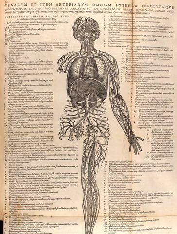 First Anatomy Book
