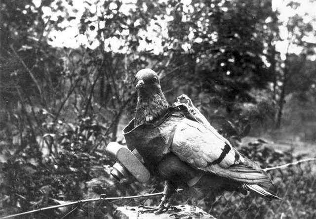 Animals in WWI