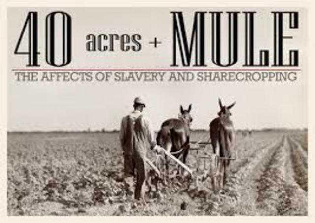 forty acres, and a mule