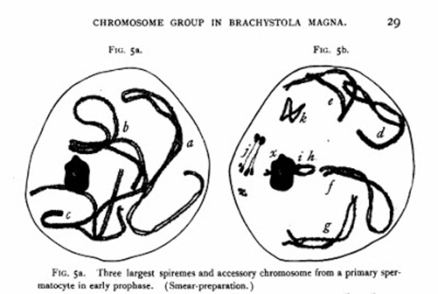 Grasshopper chromosomes identified