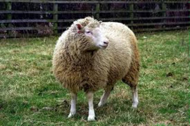 Dolly the Sheep Cloned from Adult Cell