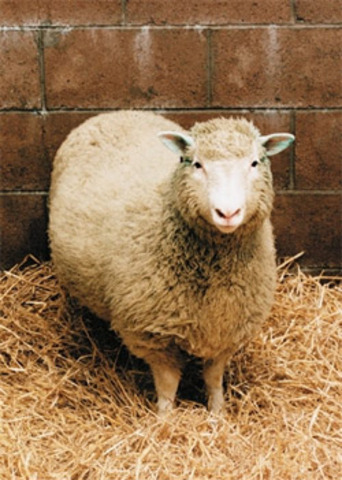 Dolly the sheep was first clone of an adult mammal.