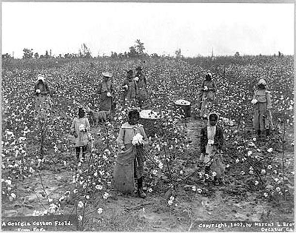 Georgia Rice Plantation Slavery - mid-eighteenth century