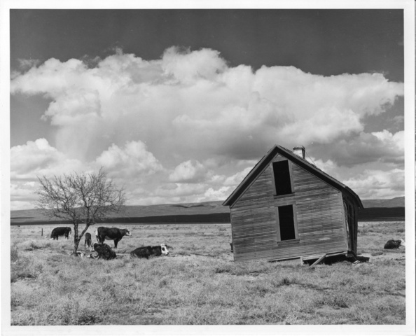 Abandoned farm near Quincy, Wash.