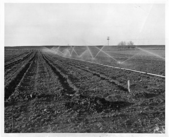 Picture shows sprinklers in operation on a field in Franklin County Irrigation District No. 1