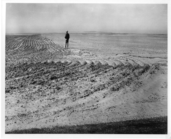 View of a wheat field near Warden, Wash. struggling against wind erosion