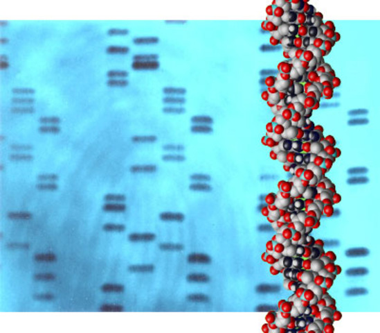 a history of the different cases of dna fingerprinting around the world The result made history the family's dna fingerprints not only showed that  dna fingerprinting and its  is economic inequality around the world getting better.