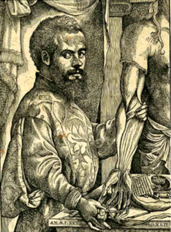 Andreas Vesalius is born.