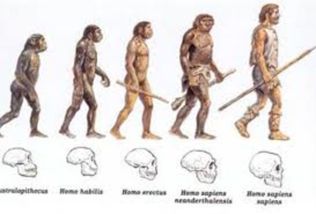 Early Humans Evolution Early Man Timeline Pic...