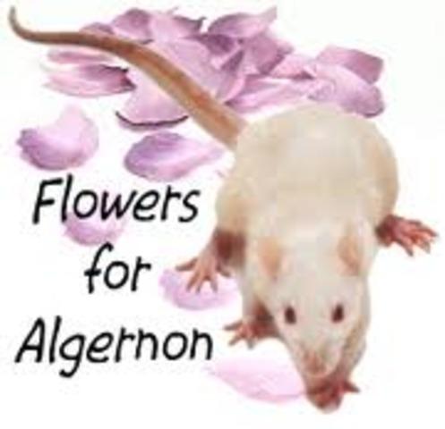 Flower For Algernon Timeline