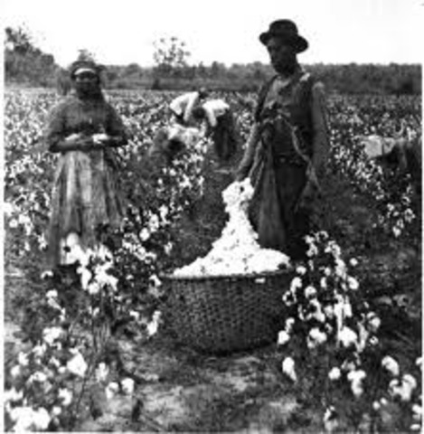 Cotton, Slavery and the South 1790's - 1850's timeline ... Cotton Plantations 1800s