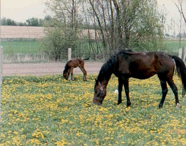 The First Michigan Foal