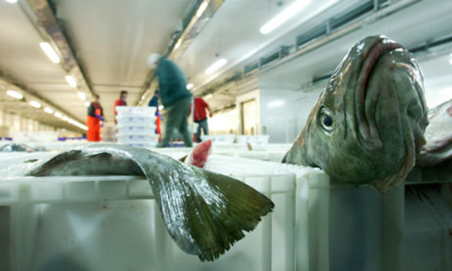 Rise in sustainable seafood products in the UK