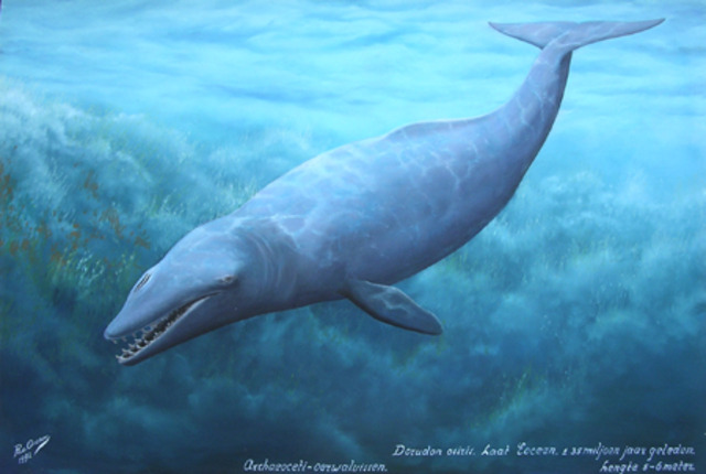 The Dorudon: 40 Million Years Ago