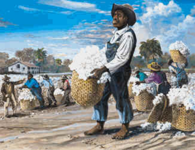 Slavery begins with cotton