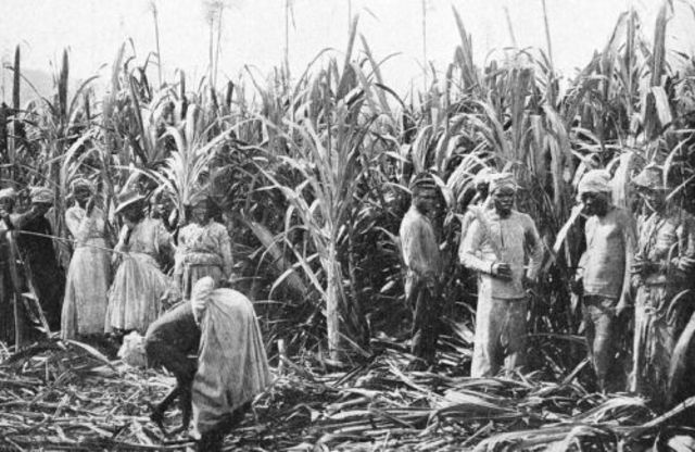 plantation society in the caribbean today Definition of caribbean society – our online dictionary has caribbean society information from international encyclopedia of the social sciences dictionary spain, however, now struggling to satisfy the economic ambitions of her remaining new world colonies, strongly supported the growth of type 4 plantations in cuba.