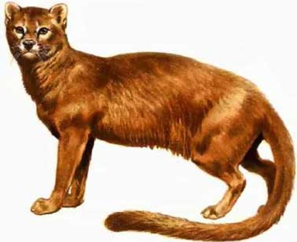 Ancestor Of Dogs And Cats