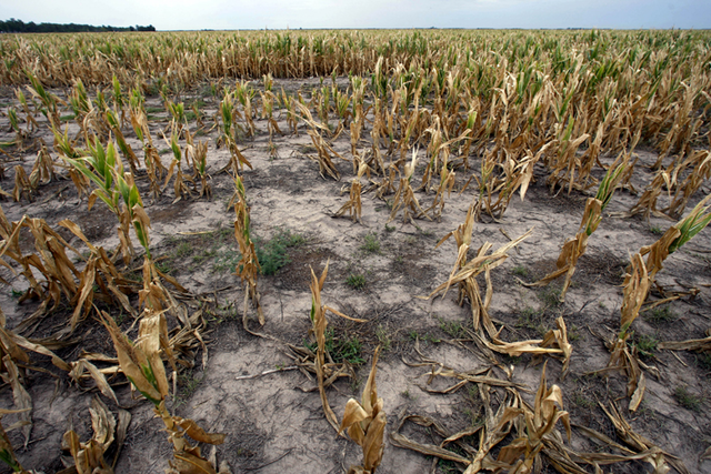 Bad Harvests Lead to Food Shortages