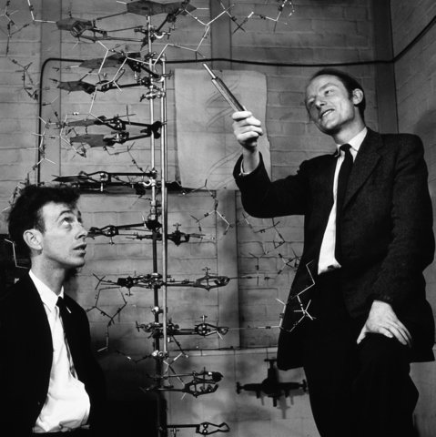 "Watson and Crick discover ""double helix"" structure of DNA"