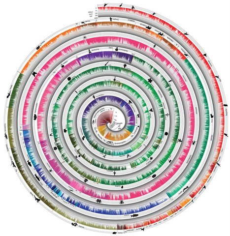Temple University publishes Time Tree of Life